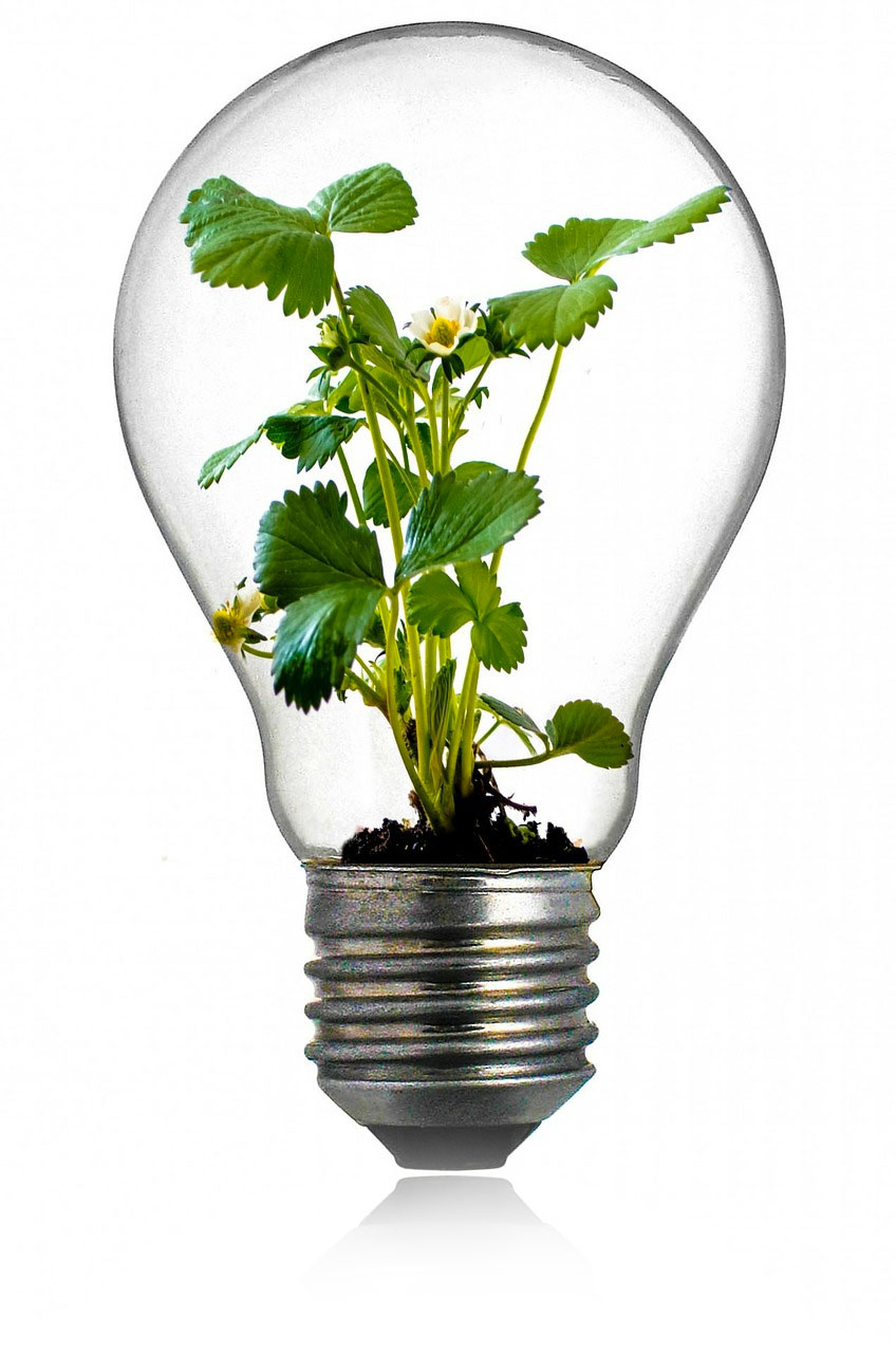 light bulb with plants growing inside it